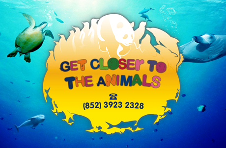 Get Closer To The Animals
