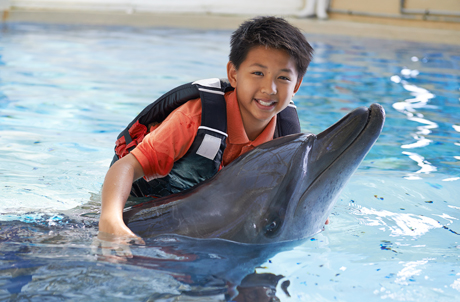 Dolphin Encounter (Enroll Now!)