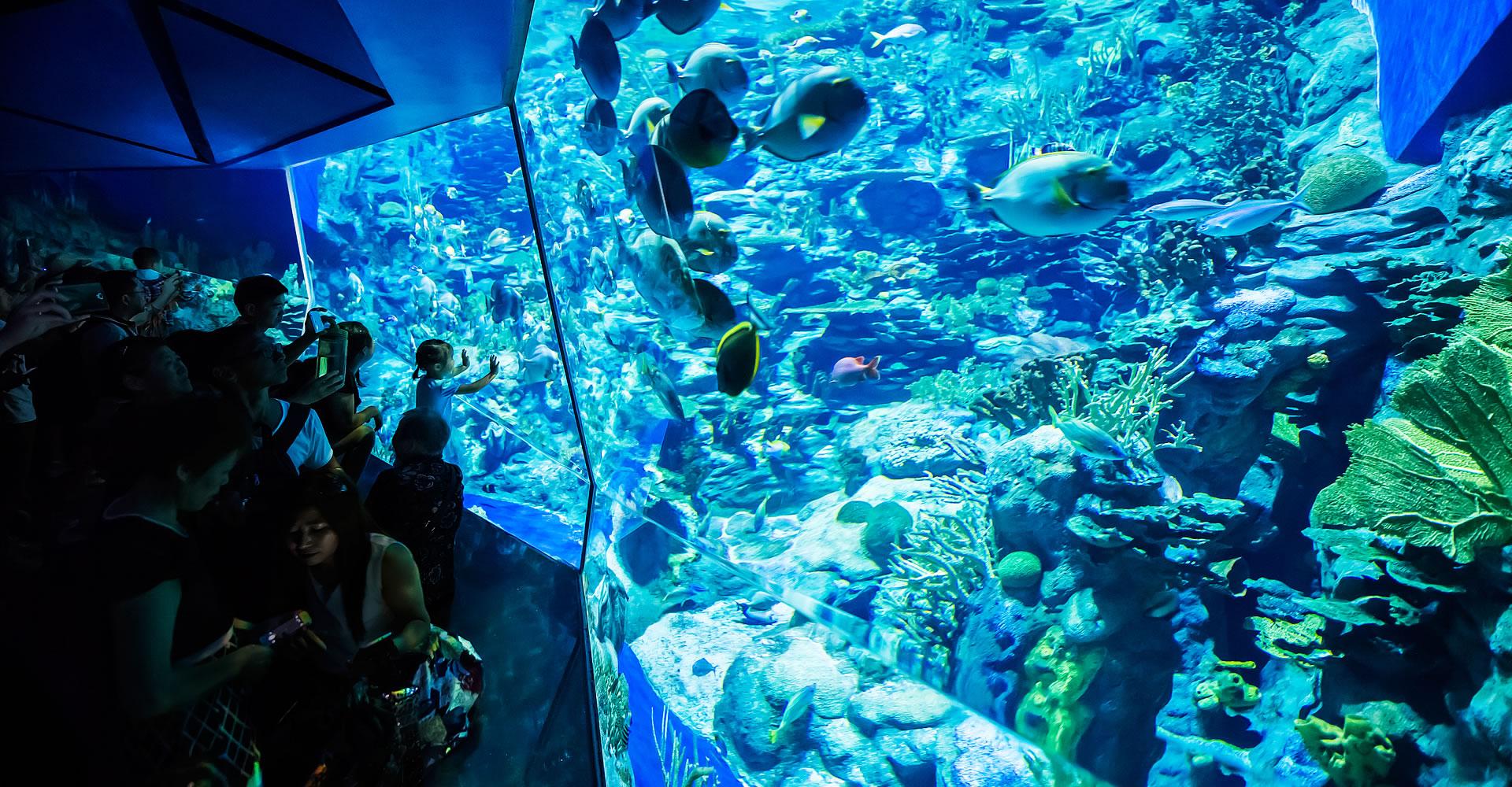 Grand aquarium attractions park experience ocean for Achat grand aquarium