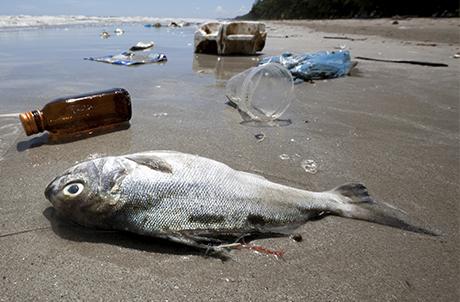受海洋垃圾危害的动物至少267种