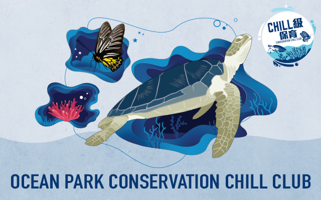 Ocean Park Chill Club Conservation
