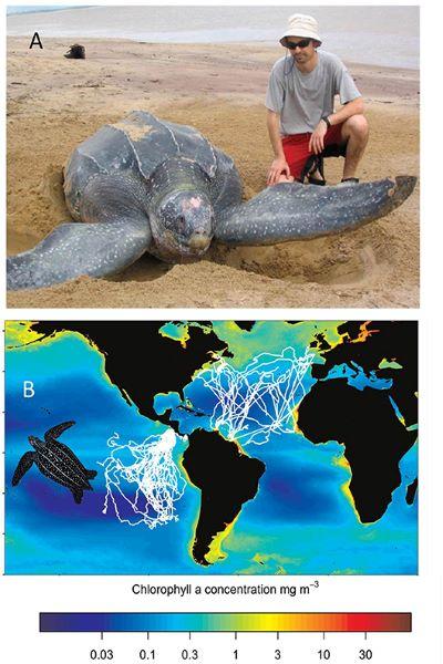 研究發現的海龜遷徙軌跡 來源: Bailey et al. (2012)