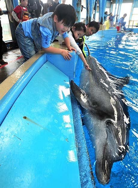 Photo 2: Peter, an annual pass holder of the Beijing Aquarium, was delighted as he touched a dolphin for the first time. It has a very smooth texture which feels special, he said.