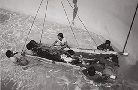 "January 1979 The killer whale ""Hoi Wai"" arrived Ocean Park from Iceland"
