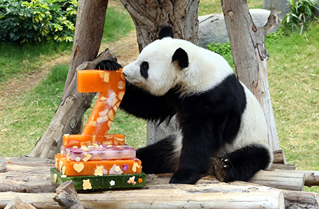 Photo caption: (Left) Giant fruit platter for Giant panda Jia Jia (Right) Giant ice cakes prepared for Giant panda Ying Ying