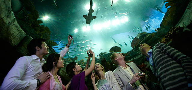 Photo 1: The Grand Aquarium boasts the world's largest 5.5-metre aquarium viewing dome, allowing guests to appreciate close to 5,000 fish of over 450 species