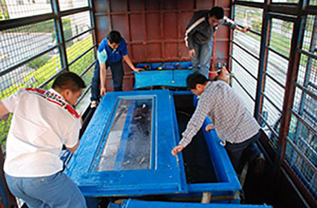 Picture 2: Ocean Park aquarists and researchers from the Yangtze River Fisheries Research Institute monitored the fish throughout the journey and also checked the water temperature and salinity at regular intervals.