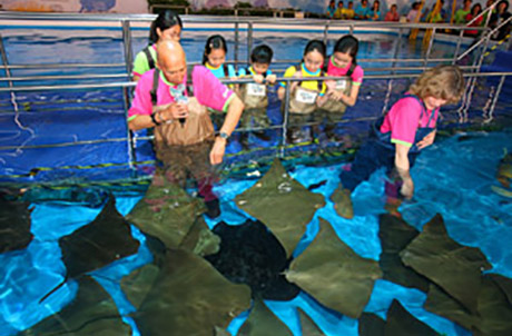 Dr. Allan Zeman and Foundation Director of Ocean Park Conservation Foundation, Hong Kong, Ms. Suzanne M. Gendron fed Stingrays together