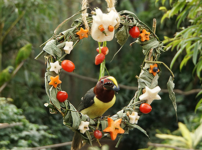 Over at the Rainforest, birds peck at their favourite food and rejoice as they flutter in-and-out of a fruit and bamboo wreath that was beautifully arranged by their keepers.
