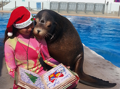 Terry the sea lion snuggles up close to take a closer look at the colourful illustrations as an animal keeper tells him a holiday.