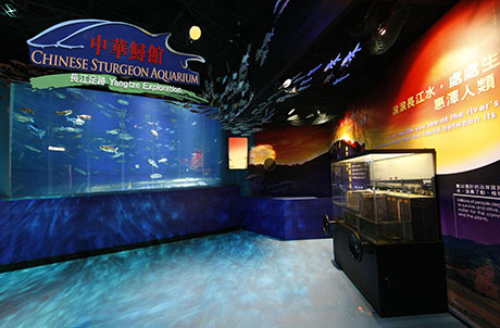 Photo 3: Chinese Sturgeon Aquarium – Yangtze Exploration