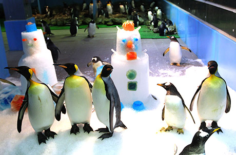Photos 1 & 2: Penguins dancing around the snowmen