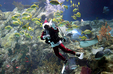 Photo 7: Diver in Santa costume in Grand Aquarium