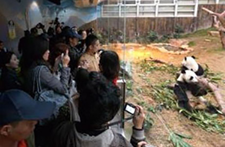The guests then went to The Hong Kong Jockey Club Giant Panda Habitat to meet giant pandas An An, Jia Jia, Ying Ying and Le Le.