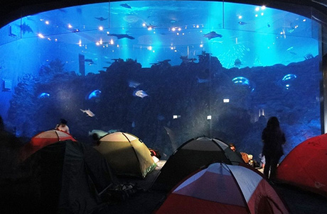 Photo 2: Participants spent a night in front of the giant viewing panel in the Grand Aquarium alongside 5,000 different fish in over 400 species.