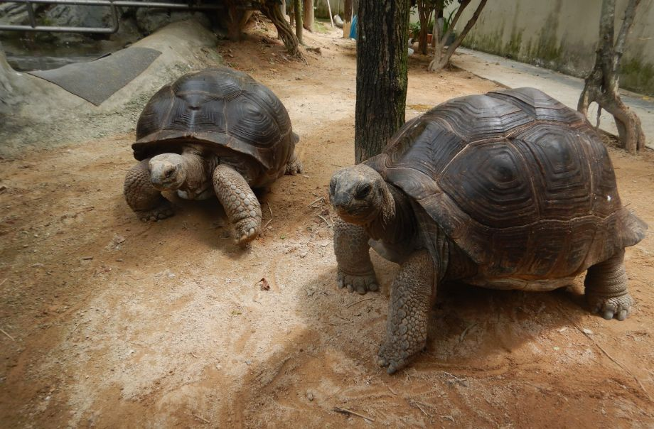 跟海洋公园的新朋友象龟见面