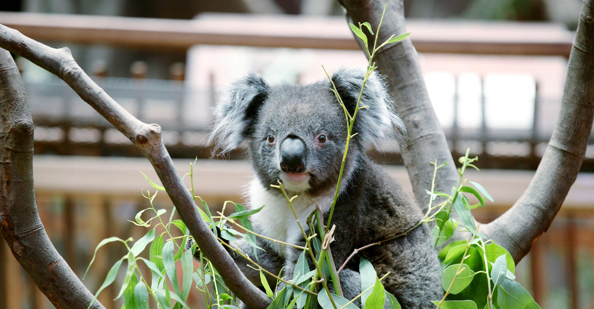 Adventures in Australia