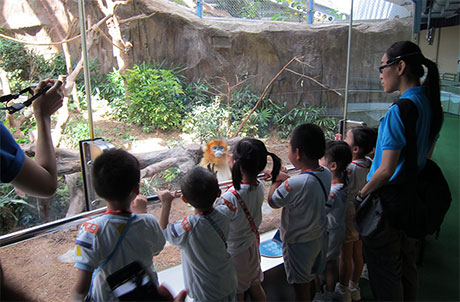 Exhibit Walk (Kindergarten)