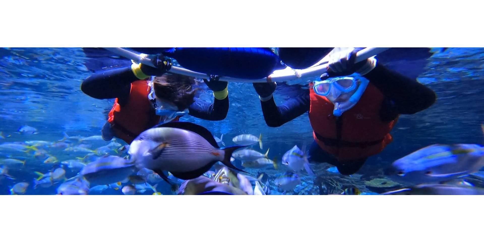 https://media.oceanpark.com.hk/files/s3fs-public/FFFO-inner.jpg