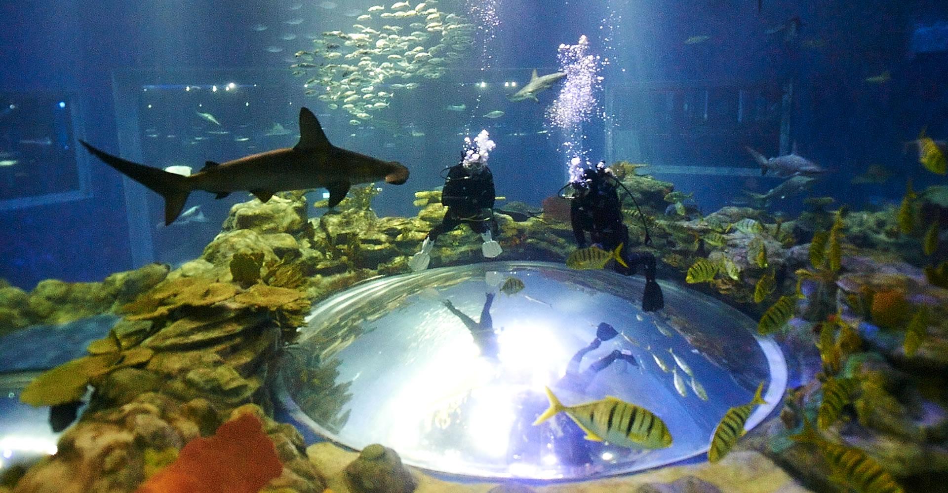 Grand aquarium scuba diving get closer to the animals for Achat grand aquarium