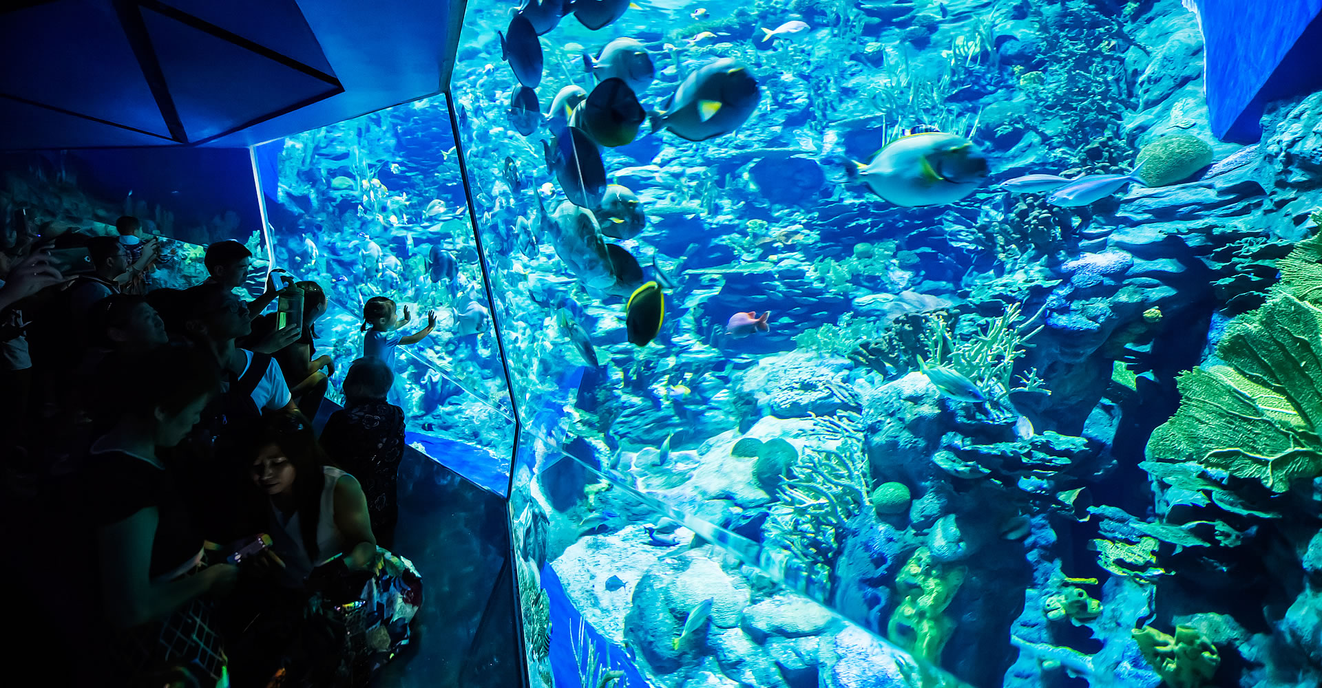 https://media.oceanpark.com.hk/files/s3fs-public/GrandAquarium_02.jpg