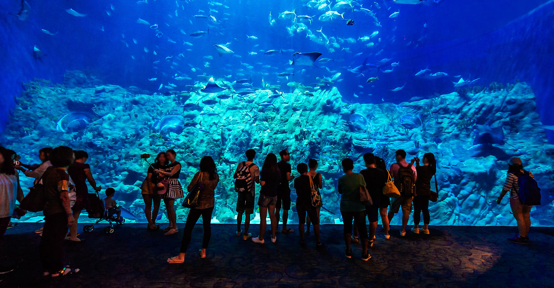 https://media.oceanpark.com.hk/files/s3fs-public/GrandAquarium_04.jpg