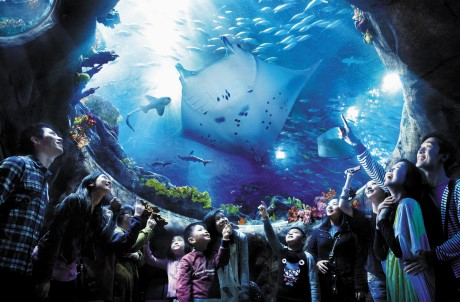 The Grand Aquarium