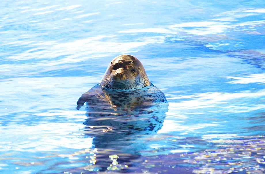 seal-feeding