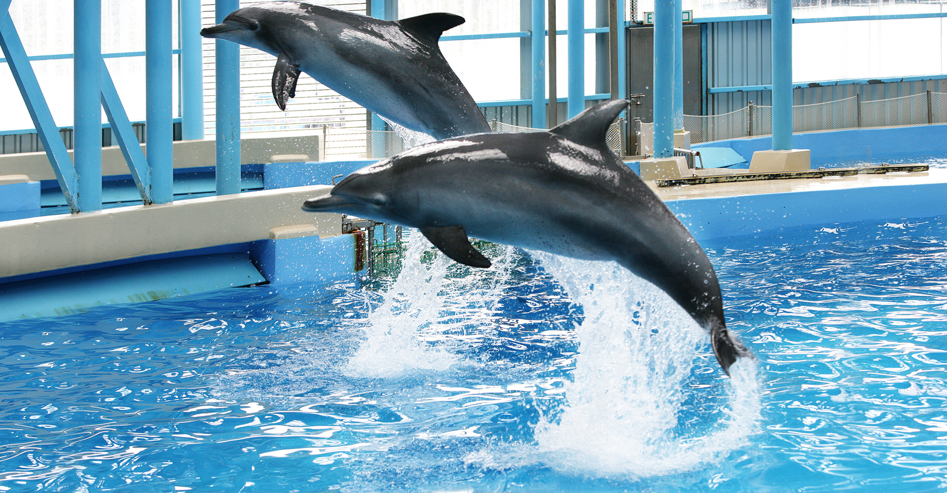 dolphins in ocean park Ocean park may disguise it as a breeding programme does captivity of dolphins help dolphin conservation no.