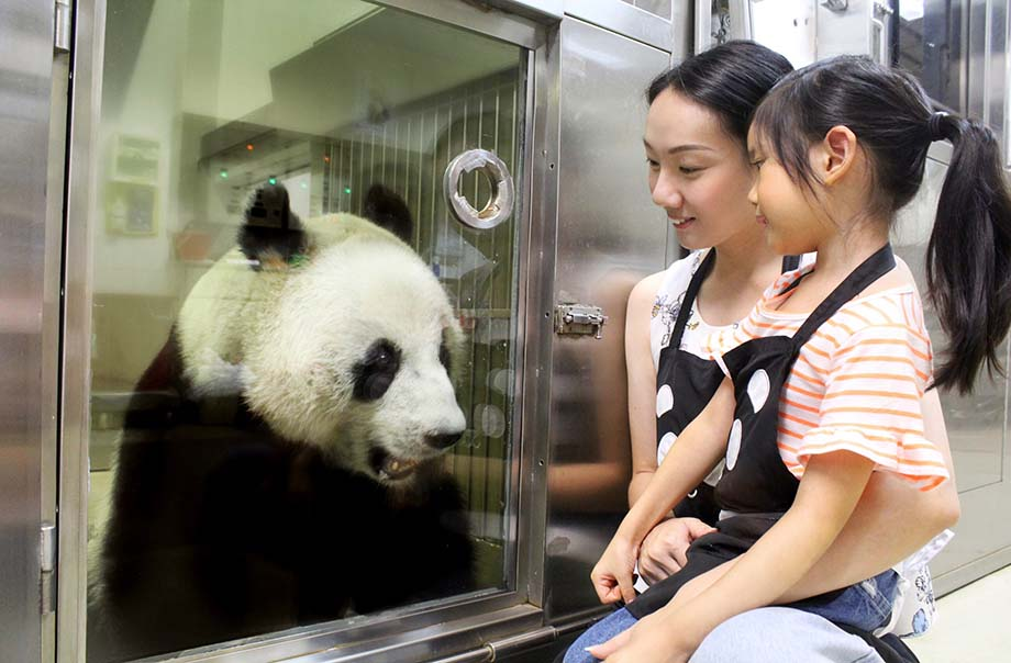 Meet the Giant Panda