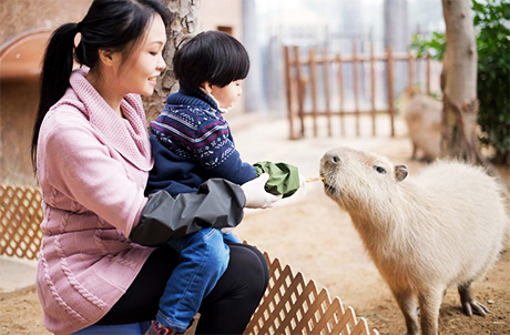 Limited-Time Event: Meet the Capybara & Tamarin