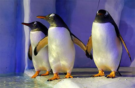 ペンギンのエサやり会