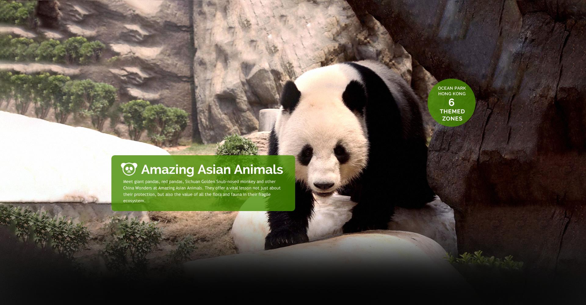 https://media.oceanpark.com.hk/files/s3fs-public/Philippine_inside_banner01_desktop_panda.jpg