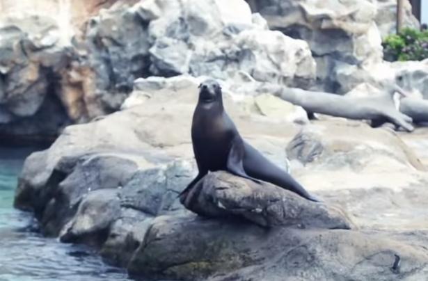 動物手術大特寫:為港海豹切除白內障