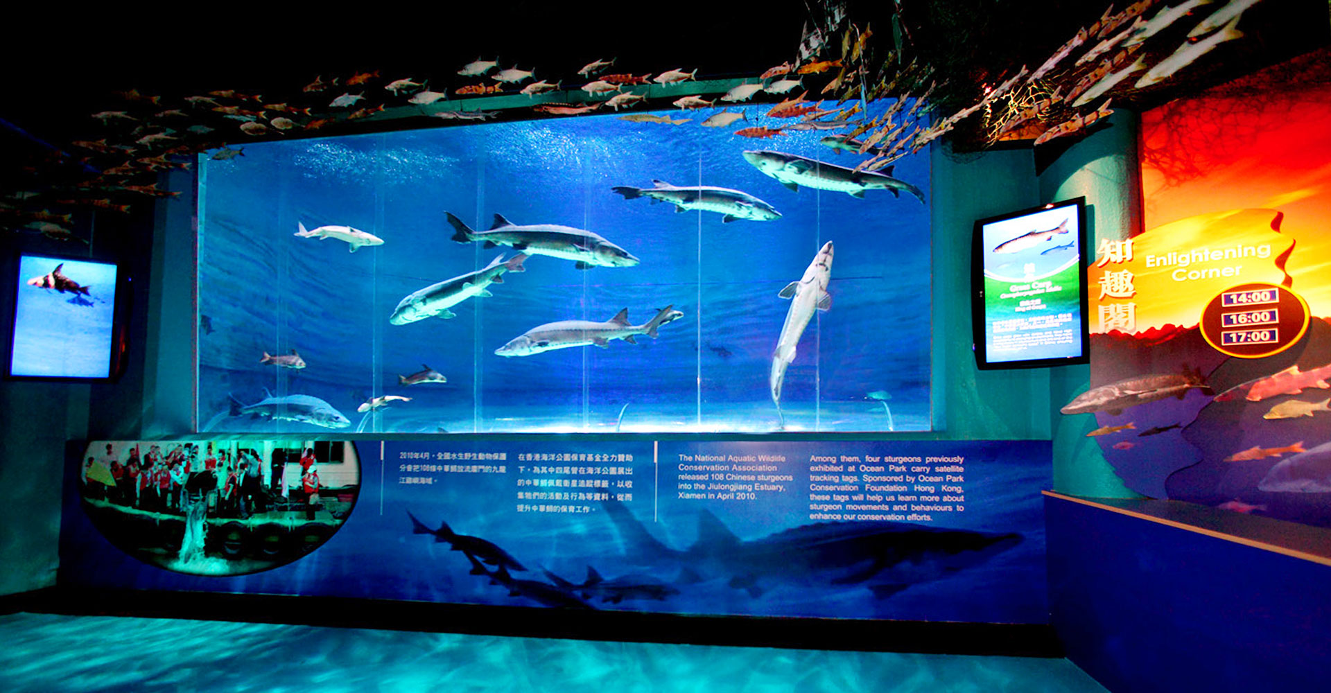 Chinese Sturgeon Aquarium - Yangtze Exploration