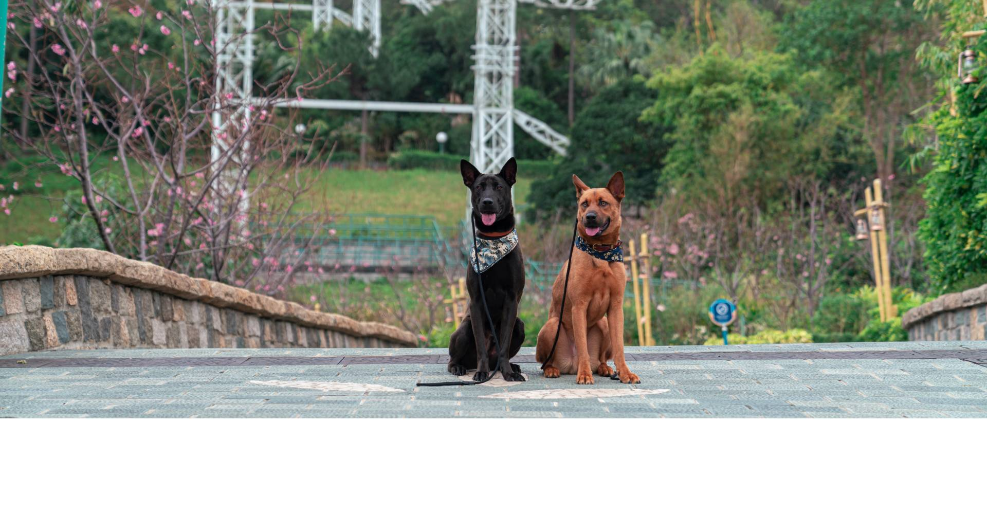 https://media.oceanpark.com.hk/files/s3fs-public/doggies-groovy-weekend_banner2.jpg