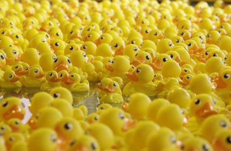 Duckie Family Pond