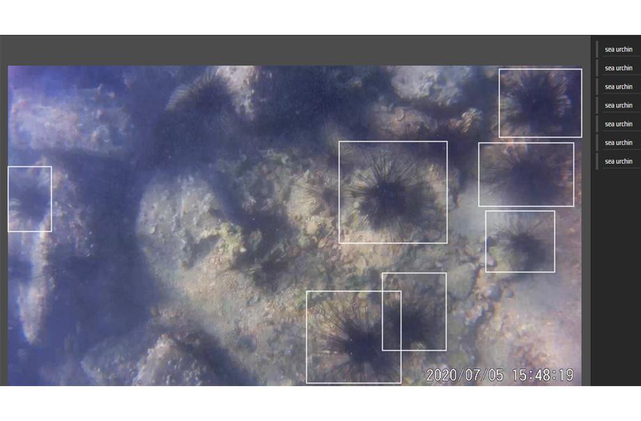 此圖片展示了海底的海膽