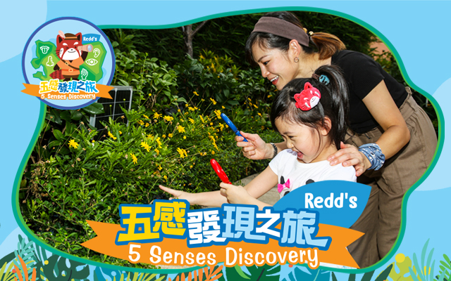 Redds 5 Senses Discovery