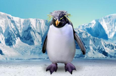南跳岩企鹅