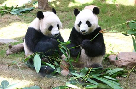 四川卧龙国家级自然保护区青年实习计划